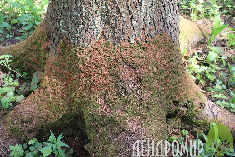 Зачем деревьям нужно лечение