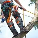 Изображение к статье - Обработка от короеда с привлечением альпинистов