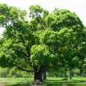 Изображение к статье - Уход за деревьями