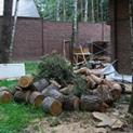 Изображение к статье - Уничтожение короеда на дачном участке. Какие обработки лучше?